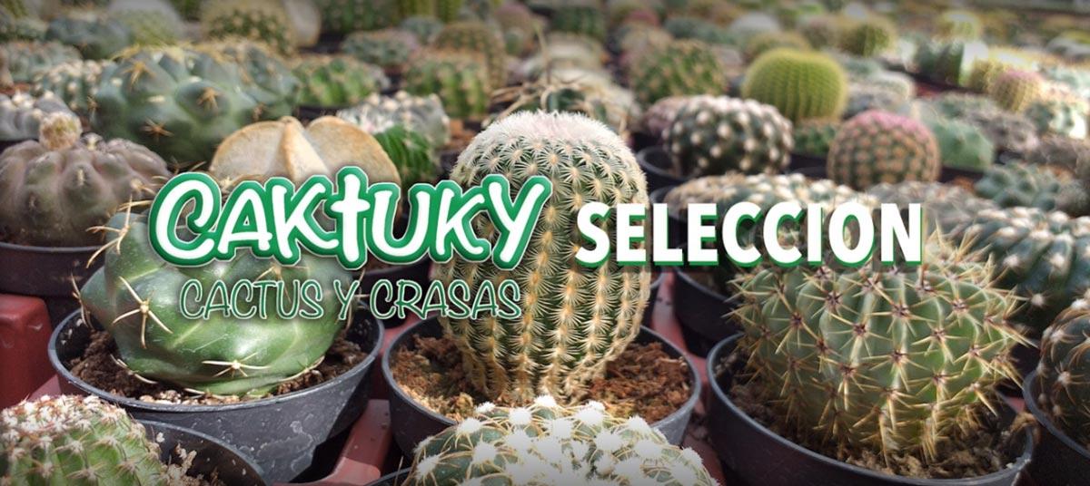 Cactuky Cactus y Crasas