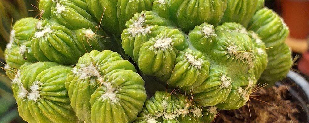 Venta de Cactus en Murcia y Alicante